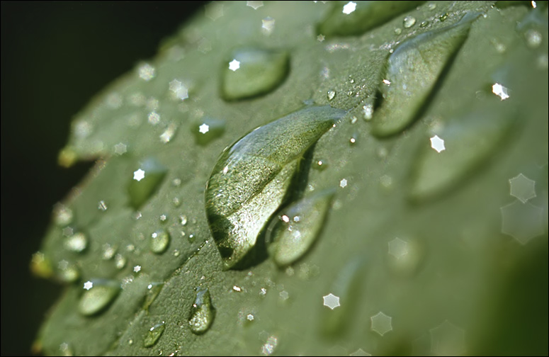 "photo ""After a rain"" tags: macro and close-up,"
