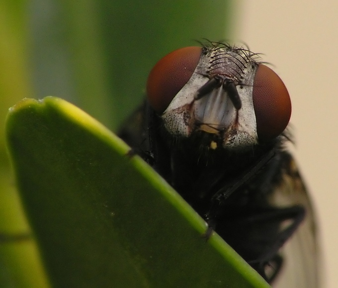 "photo ""What's up?"" tags: macro and close-up,"