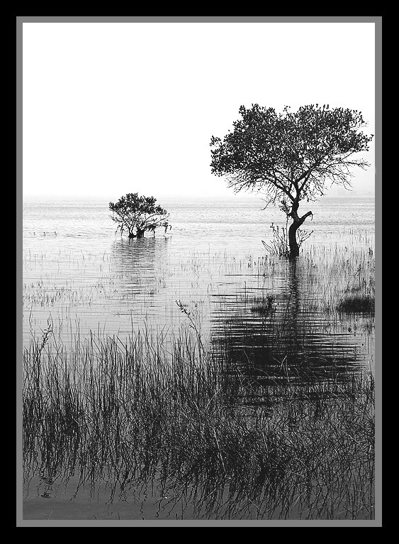 "photo ""Dreaming"" tags: nature, black&white,"