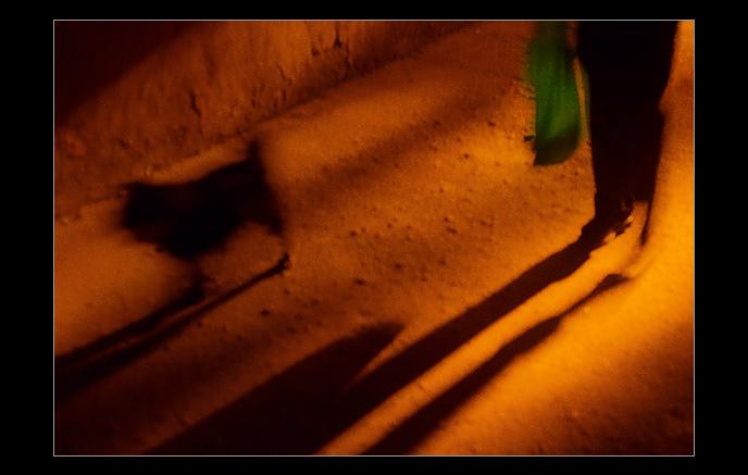 "photo ""Green.Dog.Petrogradskaya."" tags: misc.,"