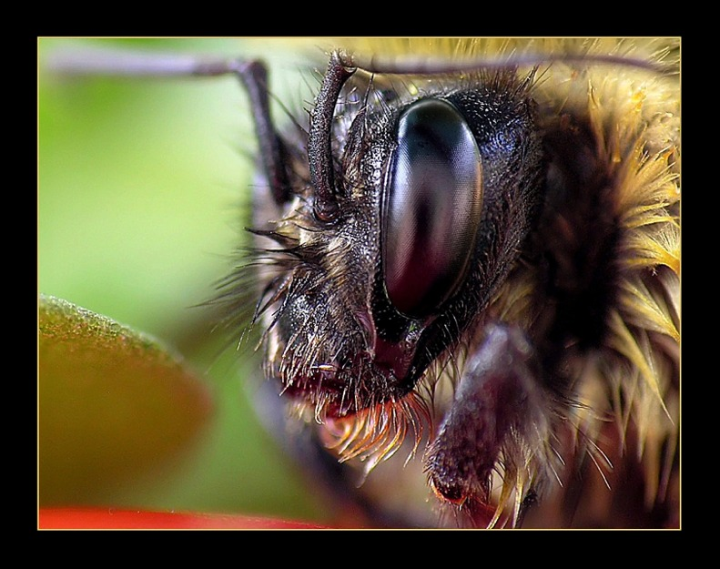 "photo ""Insect face"" tags: macro and close-up,"