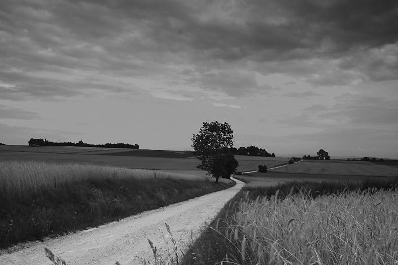 """фото """"field - road"""" метки: пейзаж,"""