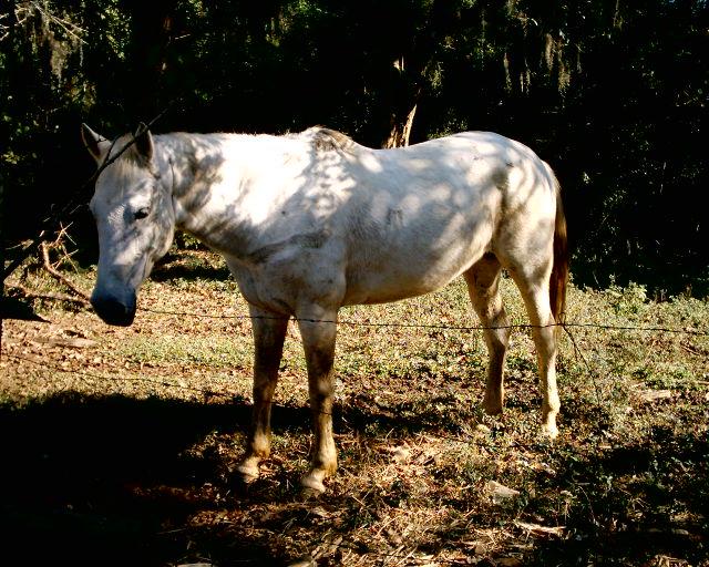 "photo ""Cavalo"" tags: misc.,"