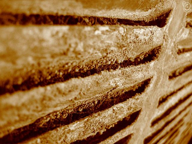 """photo """"Corrosion - 2"""" tags: still life, macro and close-up,"""