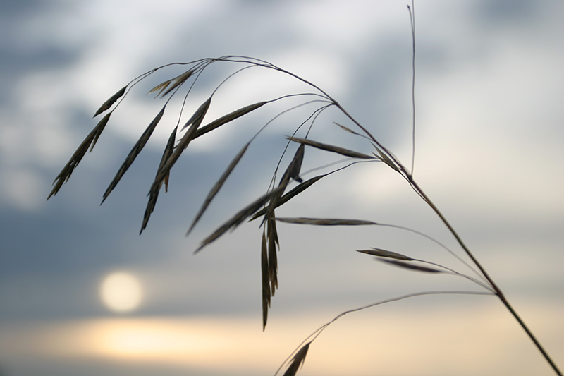"photo ""About summer"" tags: landscape, nature, flowers, sunset"