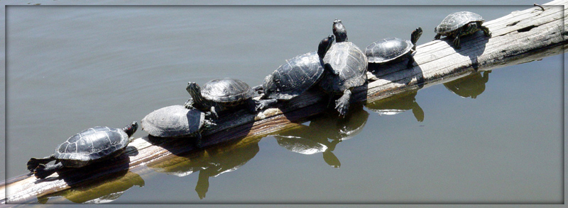 "photo ""Sunbathing...."" tags: nature, wild animals"