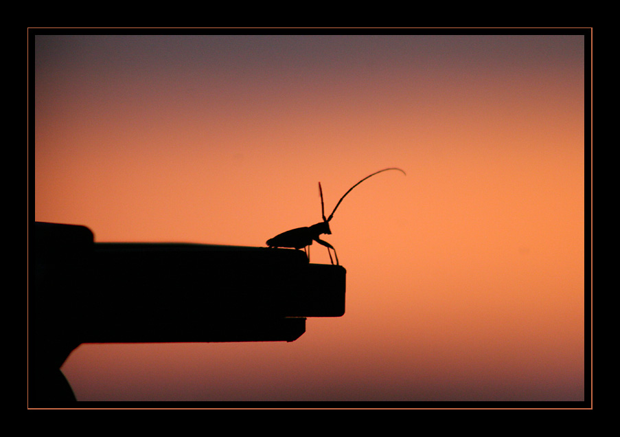"photo ""El insecto..."" tags: nature, landscape, insect, sunset"