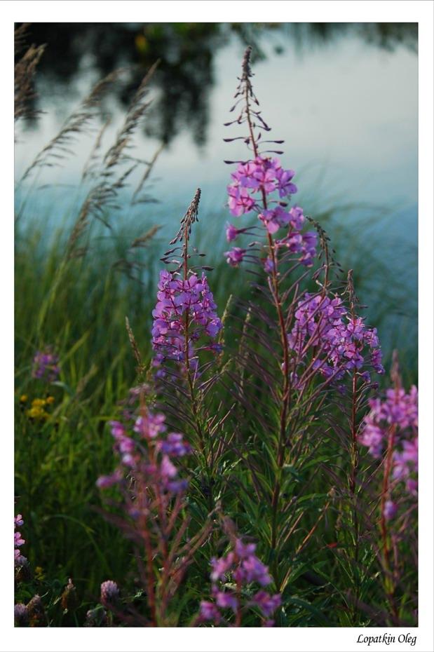 """фото """"Сибирския зарисовки 2"""" метки: природа, путешествия, цветы"""