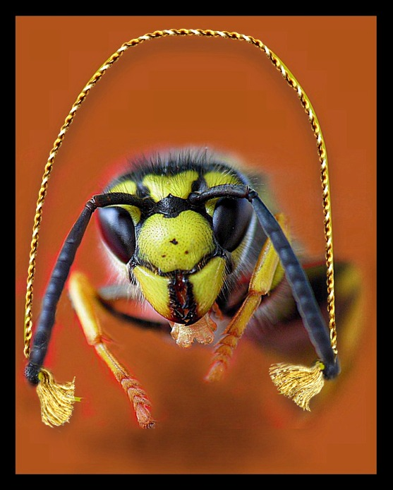 "фото ""Wasp with jumping-rope"" метки: разное,"