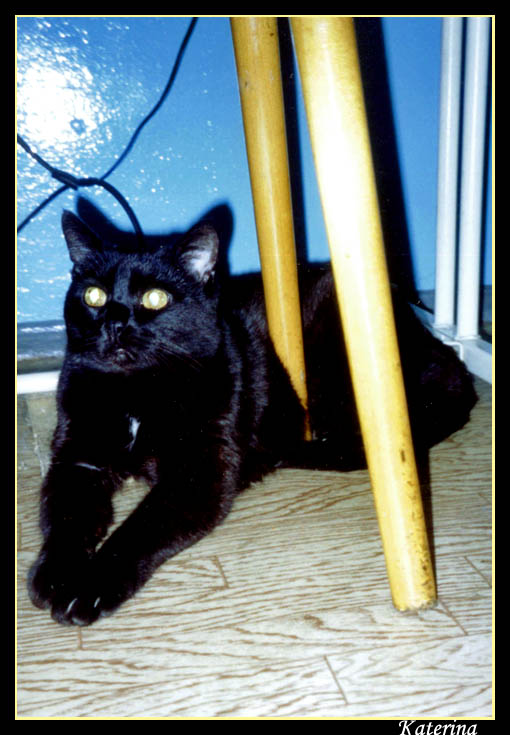 "photo ""My own sphinx or ""My! Personal! Stool!"" tags: nature, genre, pets/farm animals"