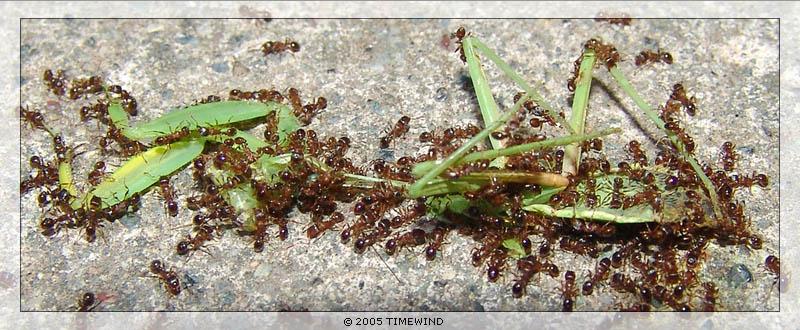 """фото """"hunt"""" метки: макро и крупный план, природа, насекомое"""