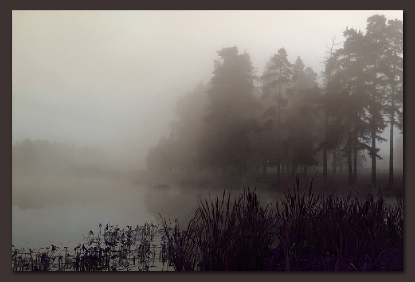 "photo ""Misty morning"" tags: landscape, forest, water"