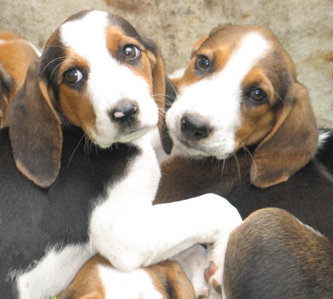"photo ""Please, take us home!"" tags: nature, pets/farm animals"