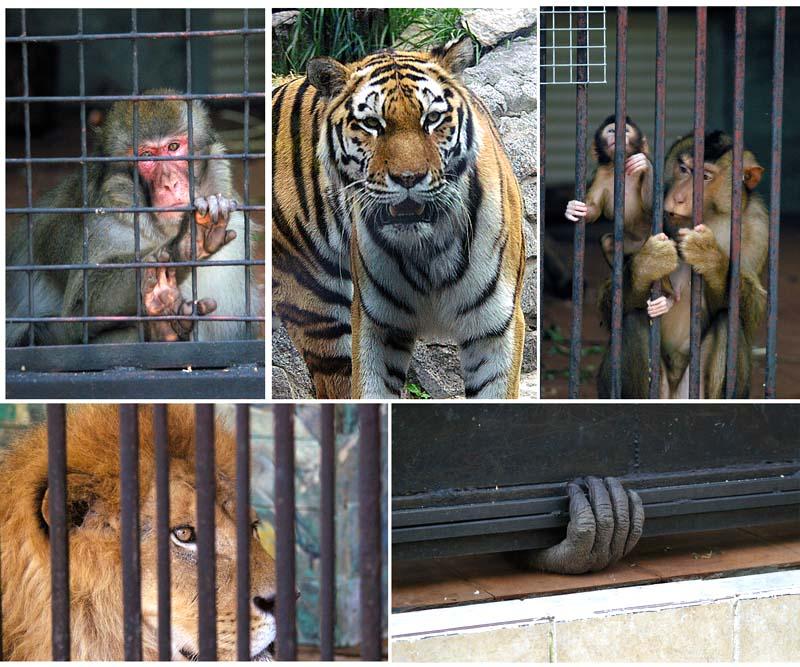 "photo ""Prisoners"" tags: nature, genre, wild animals"