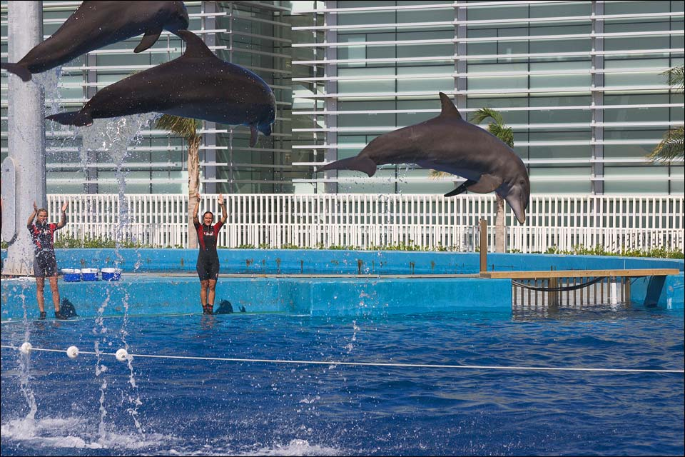 "photo ""Flying Dolphins"" tags: nature, travel, Europe, wild animals"
