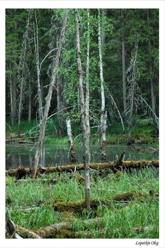 """фото """"В тайге, Западная сибирь"""" метки: природа, пейзаж, лес"""