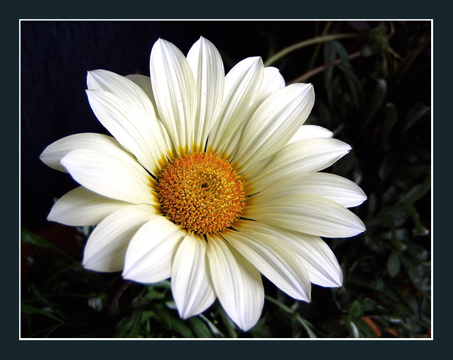 """photo """"White lady"""" tags: nature, flowers"""