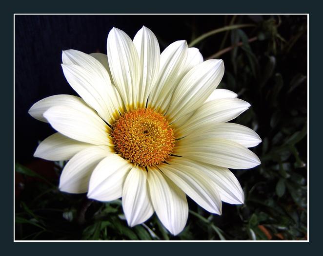 """фото """"White lady"""" метки: природа, цветы"""