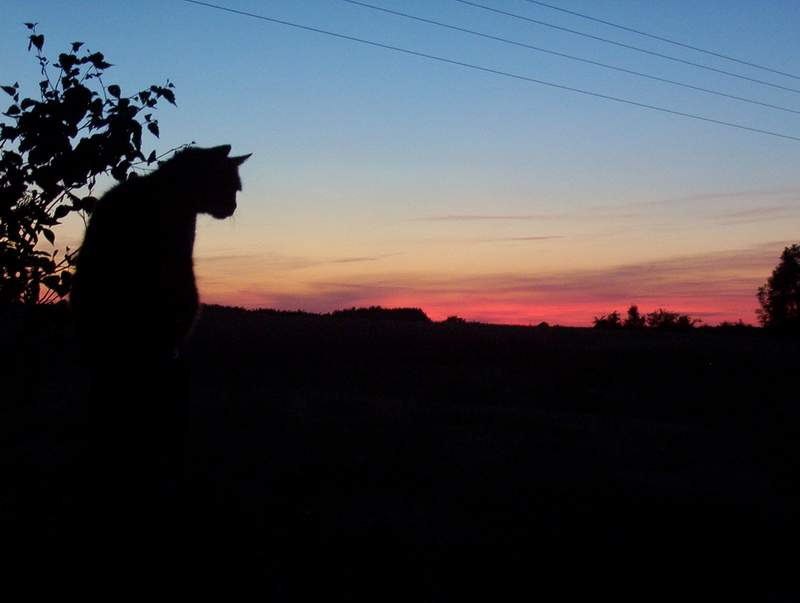 "photo ""Cat's night is comming..."" tags: landscape, sunset"