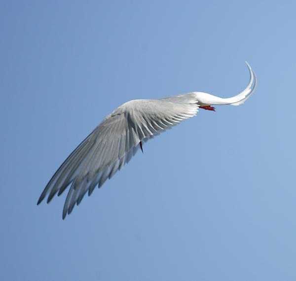 """фото """"Из серии """"Птицу видно по полету"""""""" метки: природа, дикие животные"""