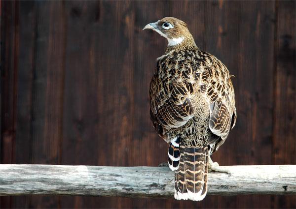 """фото """"Птица"""" метки: природа, фотомонтаж, дикие животные"""