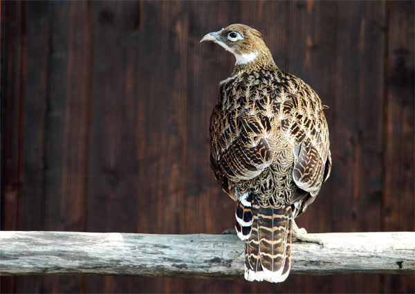 "photo ""Bird"" tags: nature, montage, wild animals"