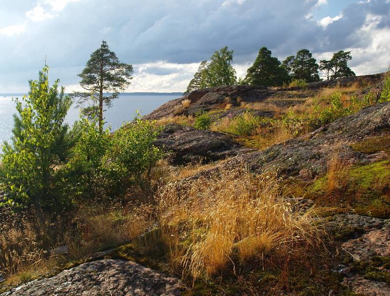 "photo ""Again on the Vyborg rocks"" tags: landscape, forest, summer"