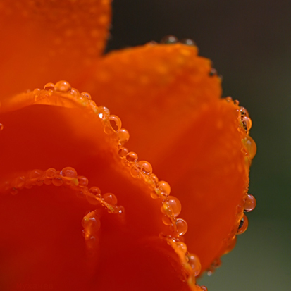 "photo ""The hot drops"" tags: macro and close-up,"