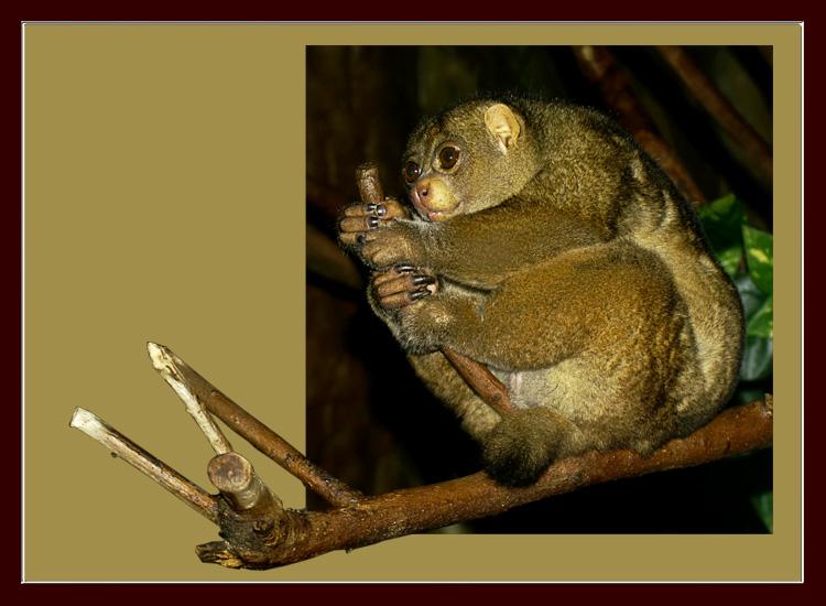 """фото """"Banzai"""" метки: природа, дикие животные"""