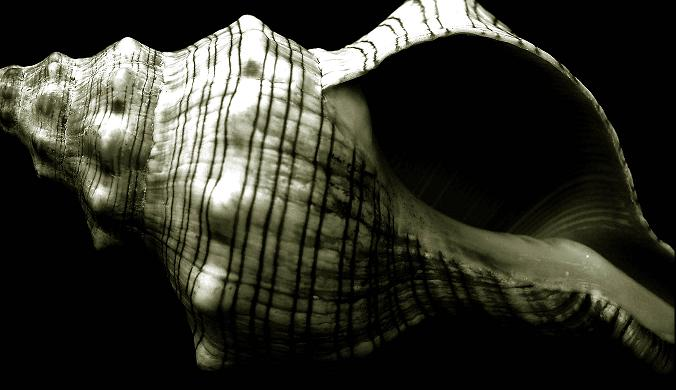 "photo ""Alone"" tags: black&white, still life,"