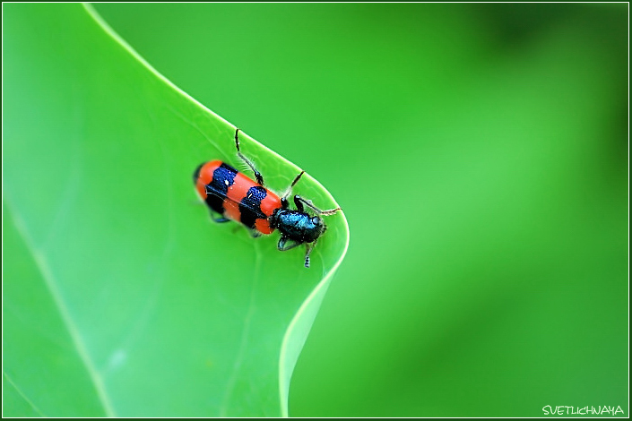 "photo ""Red on the Green"" tags: nature, macro and close-up, insect"