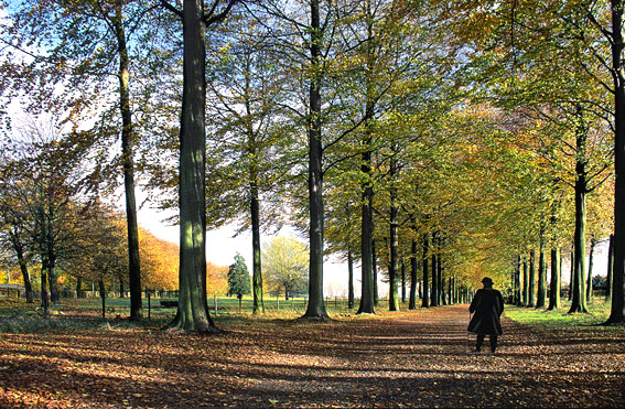"""photo """"Bois Seigneur Isaac"""" tags: landscape, forest"""