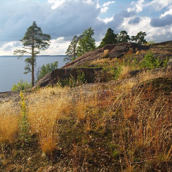 "photo ""All in the same place, on the Vyborg rocks"" tags: landscape, forest, summer"