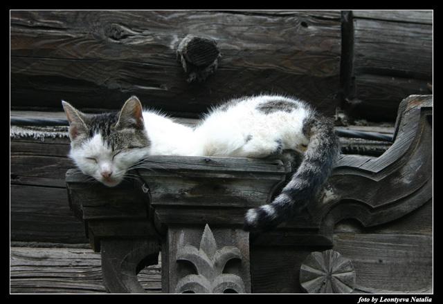 """фото """"The cat"""" метки: жанр, природа, домашние животные"""