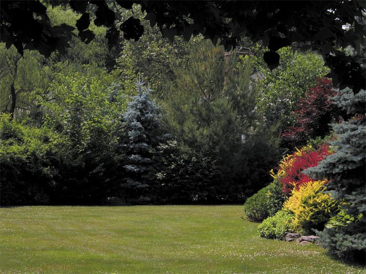 """фото """"Summer's Color"""" метки: природа, цветы"""
