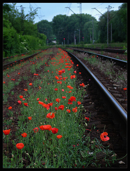 "photo ""Poppy near line"" tags: nature, travel, Europe, flowers"