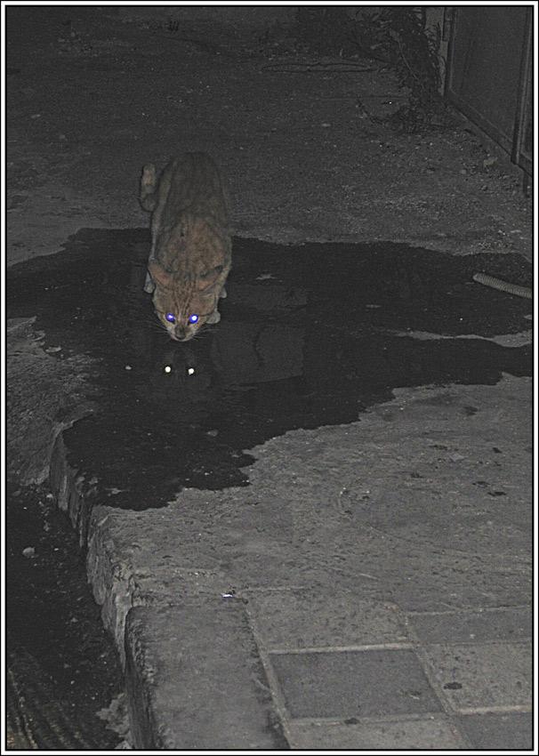 "фото ""A Night Hunter"" метки: природа, дикие животные"
