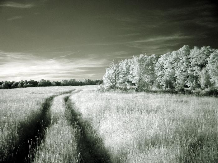 "photo ""Tracks"" tags: landscape, nature,"