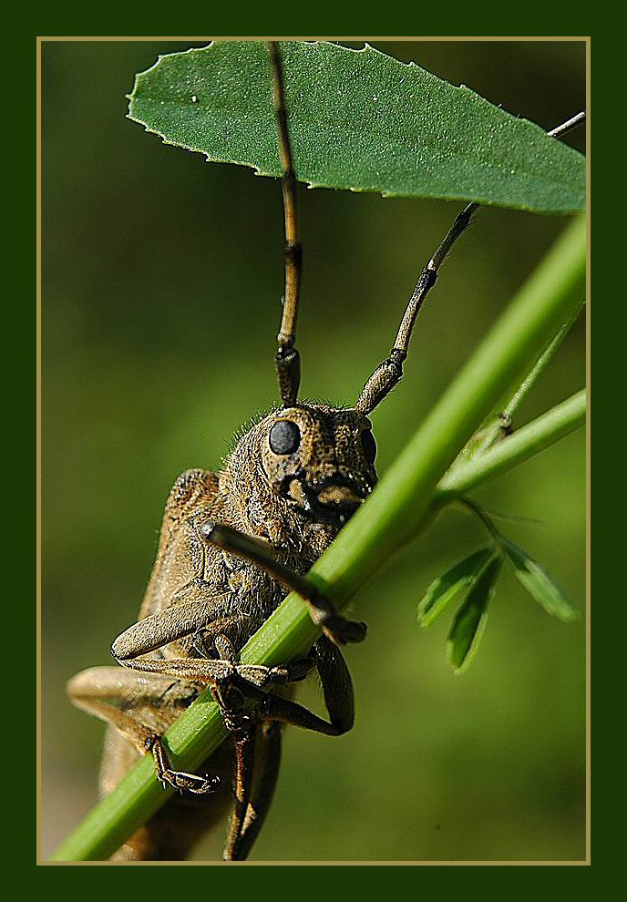 "photo ""дозорный"" tags: macro and close-up, nature, insect"