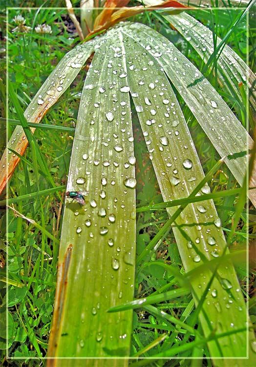 """photo """"Drops"""" tags: nature, macro and close-up,"""