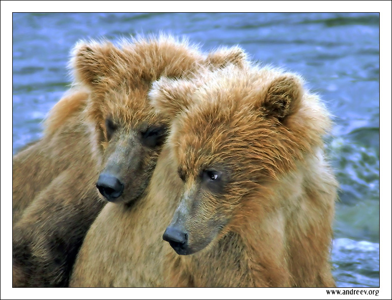 "photo ""Twins"" tags: nature, travel, North America, wild animals"
