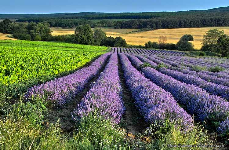 "photo ""Violet zebra of flowering"" tags: landscape, travel, Europe, summer"