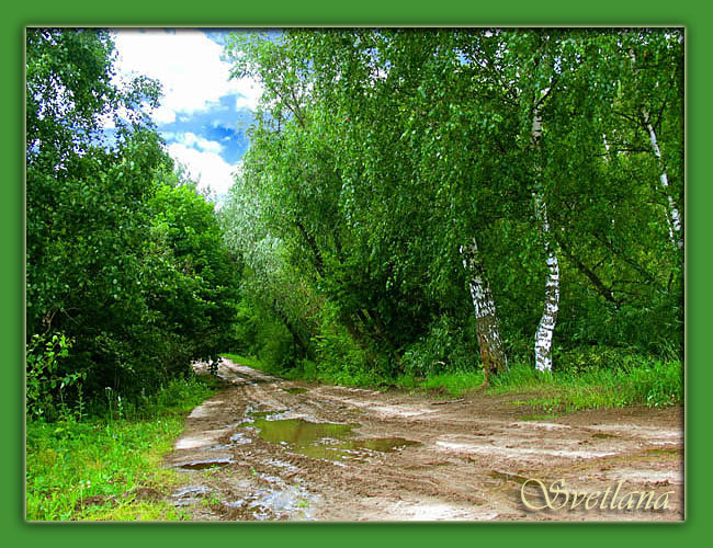 """photo """"Untitled photo"""" tags: landscape, forest"""