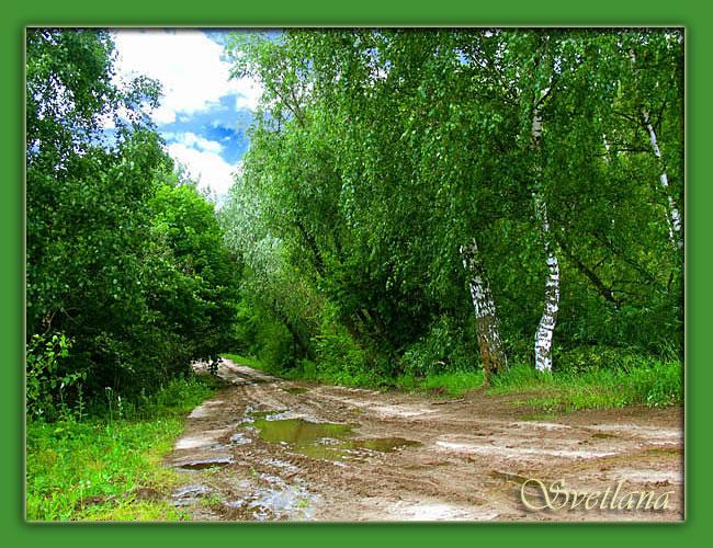 """фото """"...лес после дождя"""" метки: пейзаж, лес"""