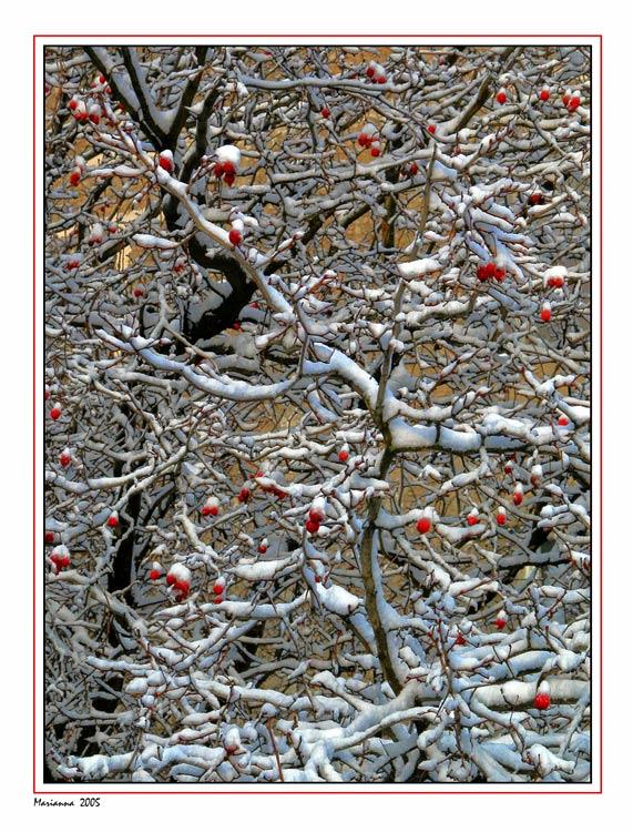 """фото """"Winter pattern"""" метки: разное, пейзаж, зима"""