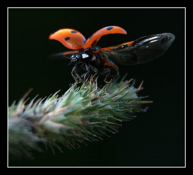 "photo ""To fly"" tags: macro and close-up, nature, insect"