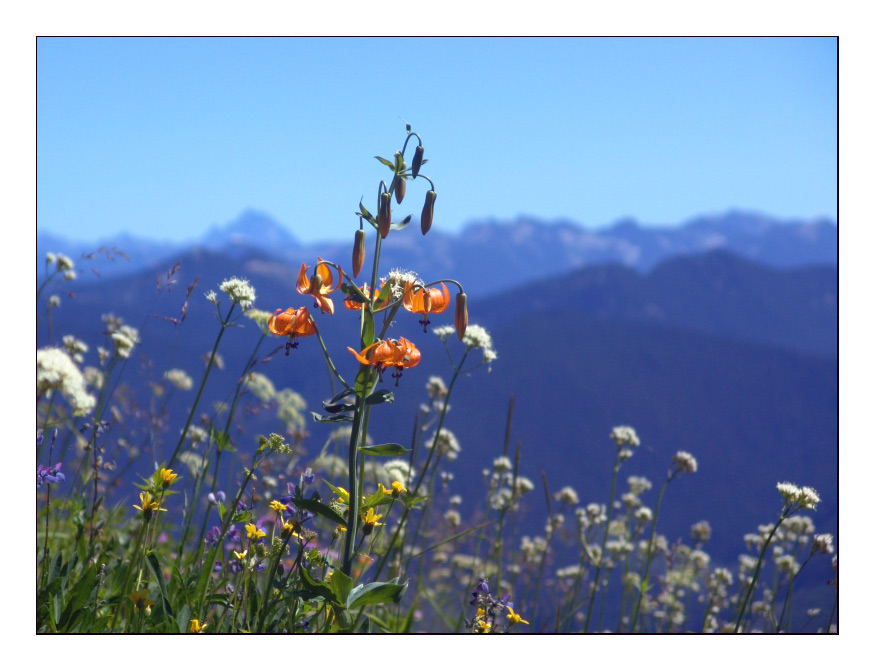"photo ""Wild Flowers"" tags: nature, landscape, flowers, mountains"