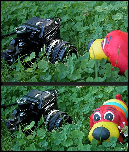 "photo ""photographer survives attack in jungle"" tags: humor, portrait,"