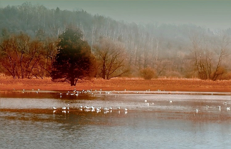 "photo ""fog"" tags: landscape, water"