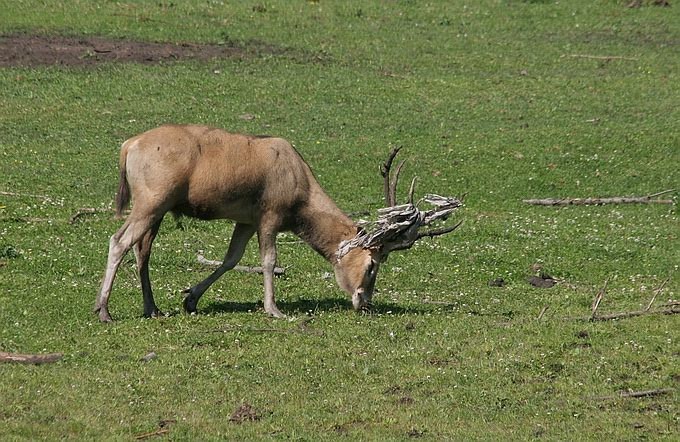 "фото ""Animal farm"" метки: природа, дикие животные"